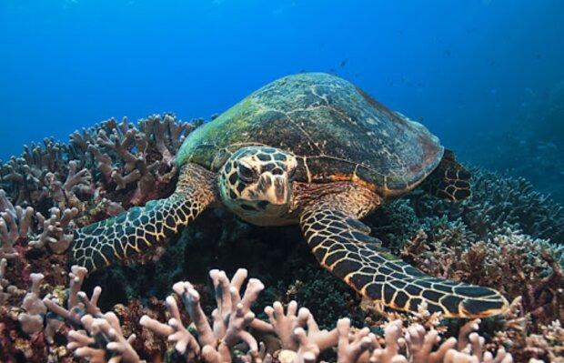 Es blieben nur wenige Tage für die Schildkröte: Sie schwamm auf den Taucher zu und zeigte ihm ihren Panzer