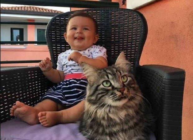 Eine riesige streunende Katze kam auf die Farm und wurde  für ein Neugeborene eine echte Freundin