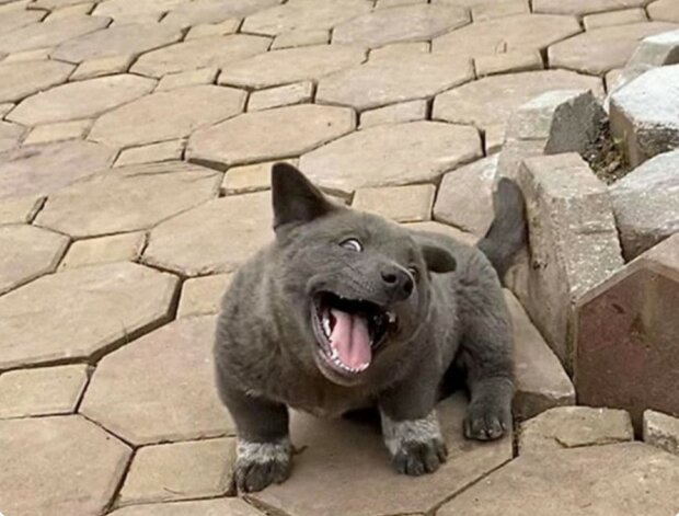 Niemand kann verstehen, wer es ist: ein ungewöhnliches Tier, das gleichzeitig wie ein Hund und eine Katze aussieht