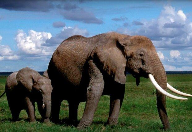 Elefanten. Quelle: Screenshot YouTube