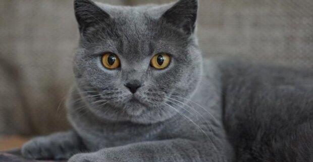 Nicht schlechter als ein Turner: Eine Katze machte einen meisterhaften Sprung und wurde ein Star von sozialen Netzwerken