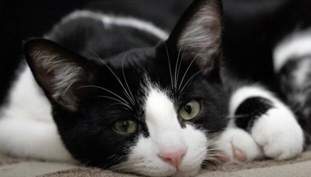 Katze . Quelle: Screenshot YouTube