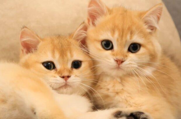 Kätzchen-Brüder. Quelle: Screenshot Youtube