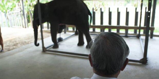 Menschen kamen zur Rettung: Elefantenbaby erhielt eine bedruckte Beinprothese und kann jetzt laufen