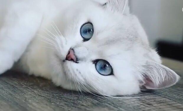 Zauberhafte Augen! Quelle: Screenshot Youtube