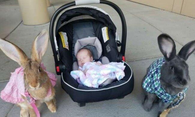 Mütterlicher Instinkt: Ein Paar Riesenkaninchen wird Babysitter für ein Baby