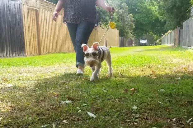 Albino-Hund Sherlock. Quelle: Screenshot Youtube