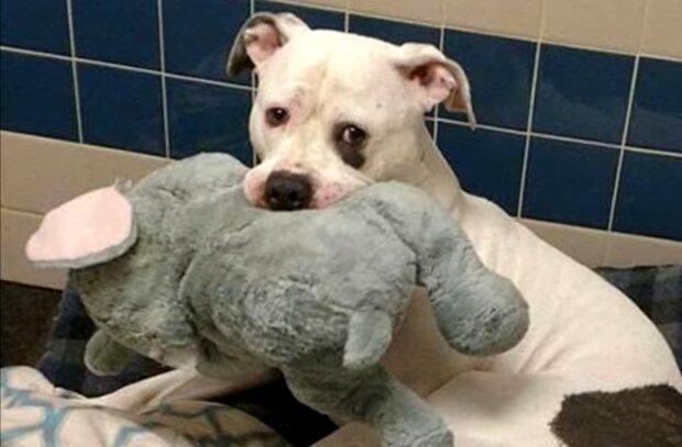 Hund mit seinem Lieblingsspielzeug. Quelle: Screenshot Youtube