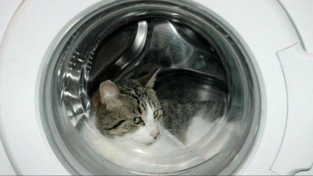 Die Waschmaschine wusch 20 Minuten lang, wenn die Besitzer ihre Katze drin bemerkt haben