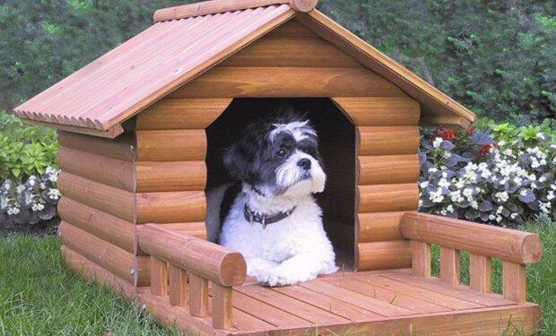 Haustiere brauchen auch ein gemütliches Zuhause