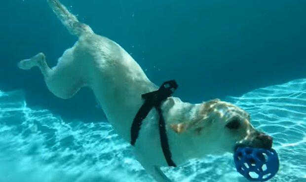Hund im Wasser. Quelle: YouTube Screenshot