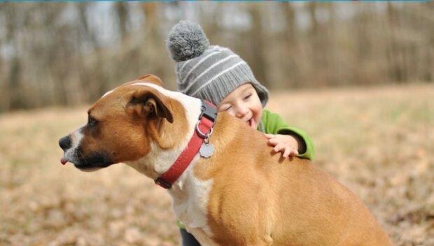 Hunde schützen oft Kinder