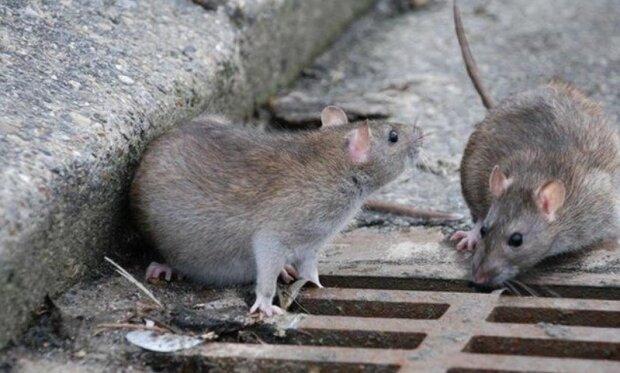 Katzen, Ratten und Elefanten: Was Pariser Ende des neunzehnten Jahrhunderts aßen