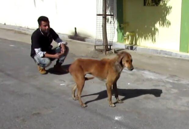 Streunender Hund. Quelle: Screenshot Youtube