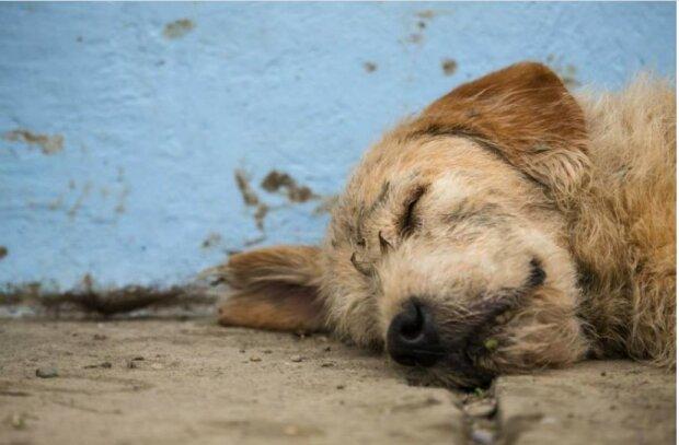 Der Hund überwand siebenhundert Kilometer extremen Dschungelpfades, um Besitzer zu gewinnen