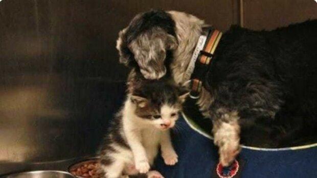 Die Hündin fütterte das Kätzchen mit ihrer Milch und rettete auf diese Weise sein Leben