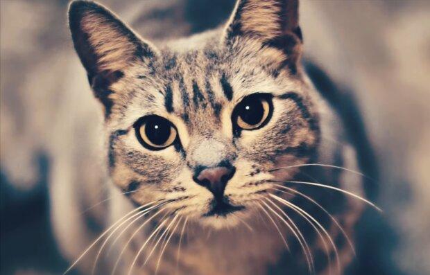 Katze wurde zur Heldin. Quelle: Screenshot Youtube