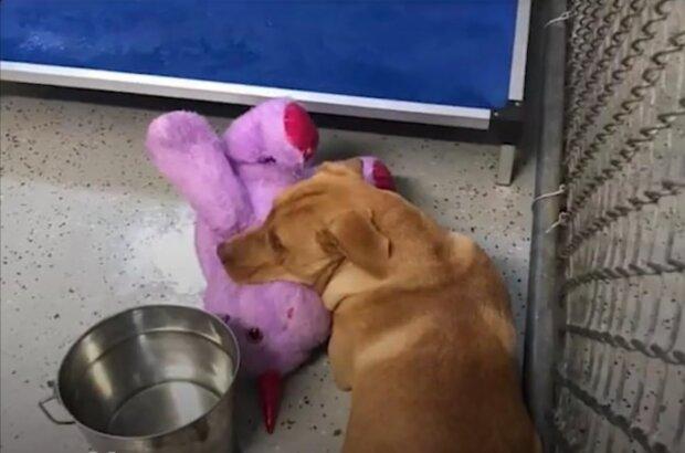 Einhorn wurde einem Hund geschenkt. Quelle: Screenshot Youtube
