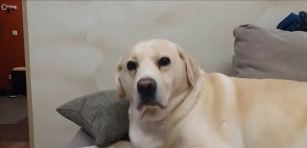 Der Hund auf einem Boot wurde von der Strömung des Flusses weggetragen, aber ein Labrador eilte zu Hilfe