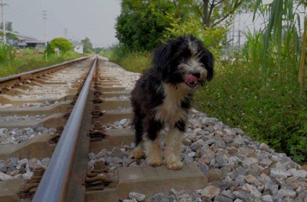 Streunender Hund. Quelle: YouTube Screenshot