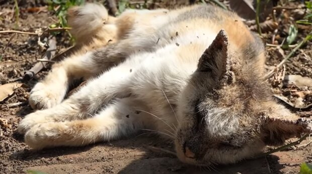 Streunende Katze. Quelle: YouTube Screenshot