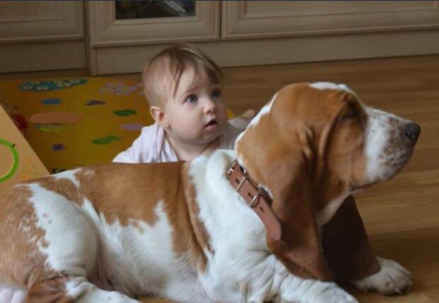 Hunde sind ausnahmslos gute Verteidiger. Quelle: Screenshot YouTube