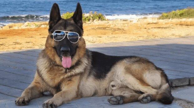 Der Hund erbte 80 Millionen Dollar und Betreuer kauften ihm ein Haus in Miami, das zuvor Madonna gehörte