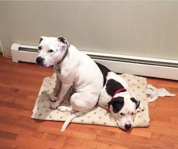 Wahre Liebe: Der Hund wollte das Tierheim nicht ohne seine Geliebte verlassen