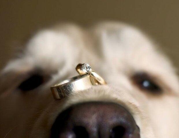 Es ist nicht die Schuld des Hündchens: wie zwei Menschen ihre Verlobung ruiniert haben