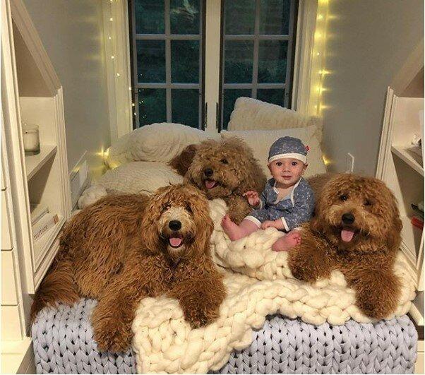 Eine rührende Freundschaft zwischen einem Jungen und drei Hunden, die die Seele wärmt