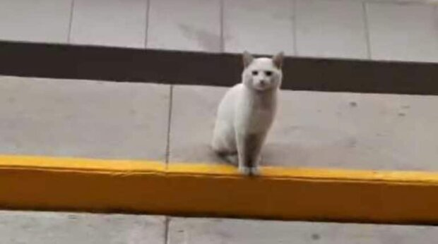 Eine schmutzige weiße Katze saß jeden Tag neben dem Laden und zog die Aufmerksamkeit auf sich