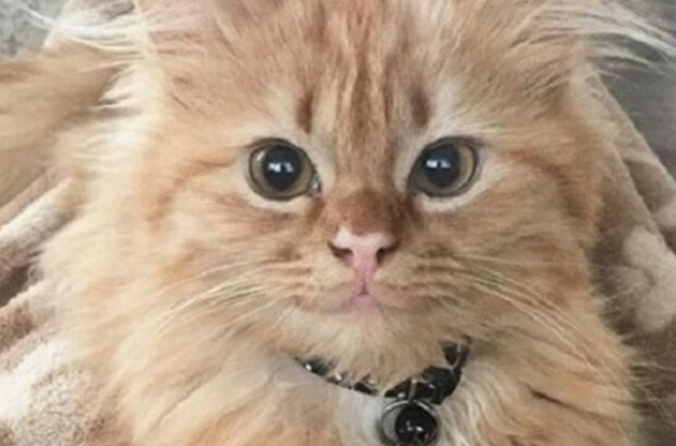 Die Katze wird wegen ihrer Ähnlichkeit mit einem berühmten Kunstwerk Mona Lisa genannt