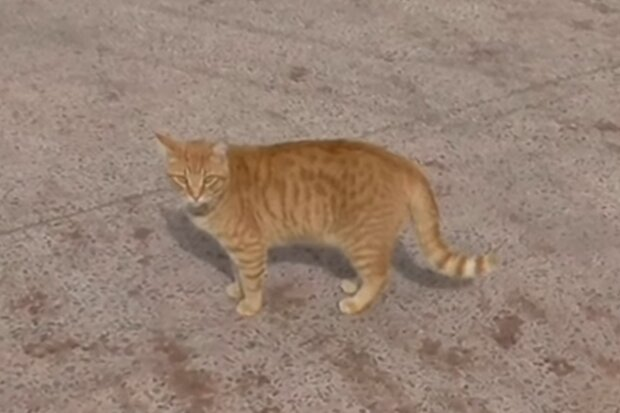 Rote Katze. Quelle: Screenshot Youtube