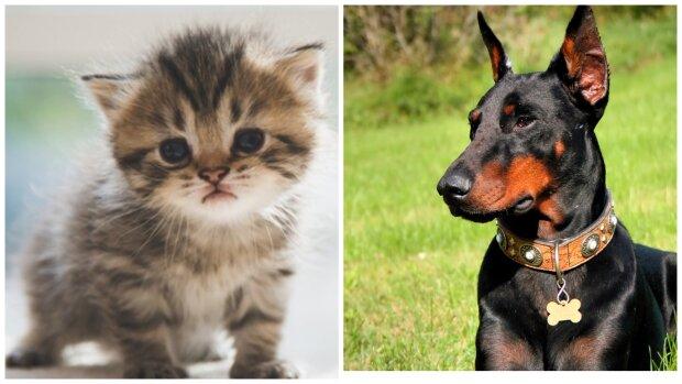 Kätzchen und Hund. Quelle: Screenshot