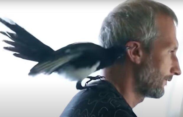 Eine Familie rettete und schützte ein Elsterküken: aber der Vogel war nicht dankbar