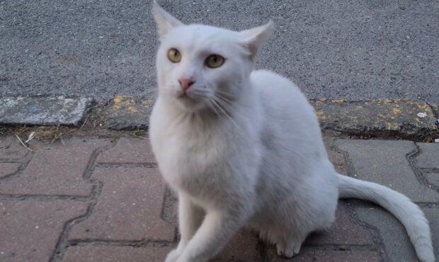 Weißes Kätzchen. Quelle: YouTube Screenshot