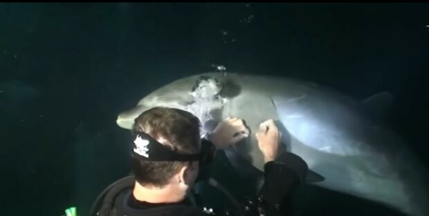 Die Taucher haben nicht damit gerechnet, dass ein Delfin ihnen so nahe kommen würde: Er bat um Hilfe