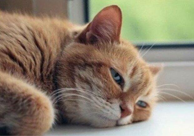 Die Frau nahm eine Katze aus einem Tierheim und heiratete den vorigen Besitzer des Tieres