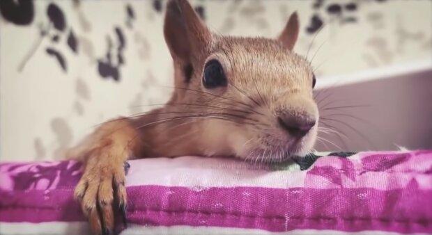 Das Eichörchen.Quelle:Screenshot YouTube
