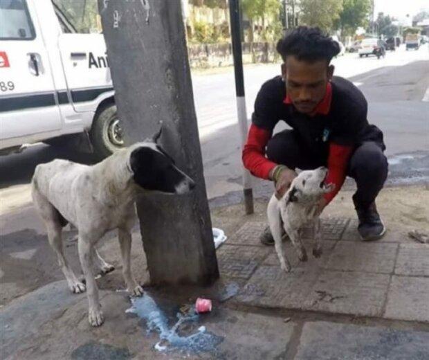Ein streunender Hund bellte und bat Leute darum, seinem Welpen zu helfen
