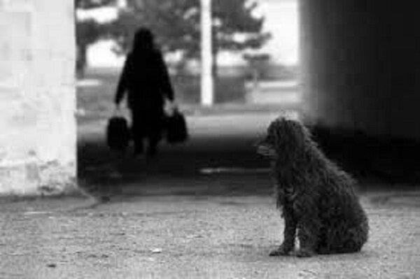 Der Hund im Laden sah jeden Passanten an: Ein Mann kam zur Rettung