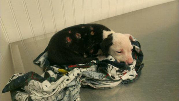 Der Welpe, der das Feuer kaum überlebte, wurde ein Feuerwehrhund