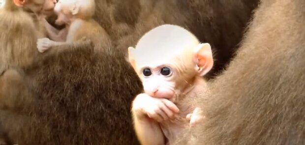 Der Affe. Quelle: Screenshot YouTube