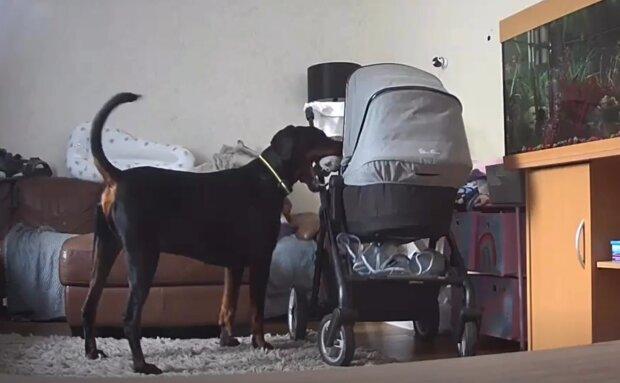 Macy und Tommy.. Quelle: YouTube Screenshot