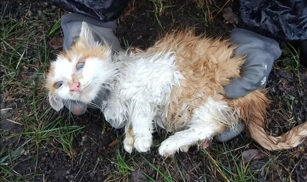 Das Kätzchen brauchte Hilfe. Quelle: Youtube Screenshot