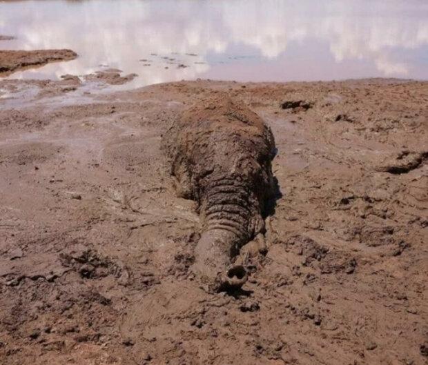 Der Elefant fiel in eine Schlammfalle und die Leute ließen ihn nicht in Schwierigkeiten