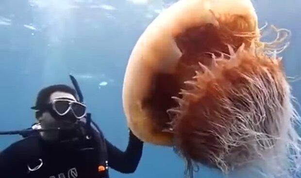 Eine riesige Qualle. Quelle: YouTube Screenshot