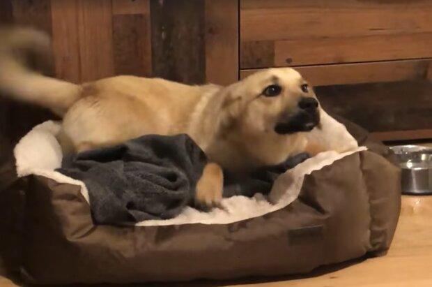 Echtes Glück: Ein obdachloser Hund bekam zum ersten Mal in seinem Leben eine Chance, in einem Tierbett zu schlafen