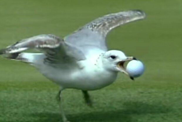Neugierige Vögel. Quelle: Screenshot YouTube