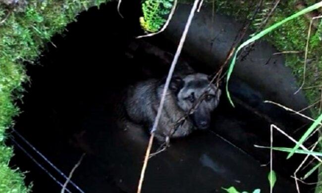 Hund in einer Luke. Quelle: Screenshot YouTube